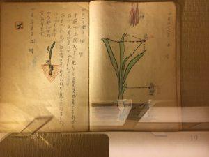 伊丹十三の小学2年の観察日記